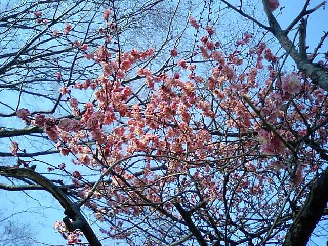 花粉症と戦いながらも、春を感じる